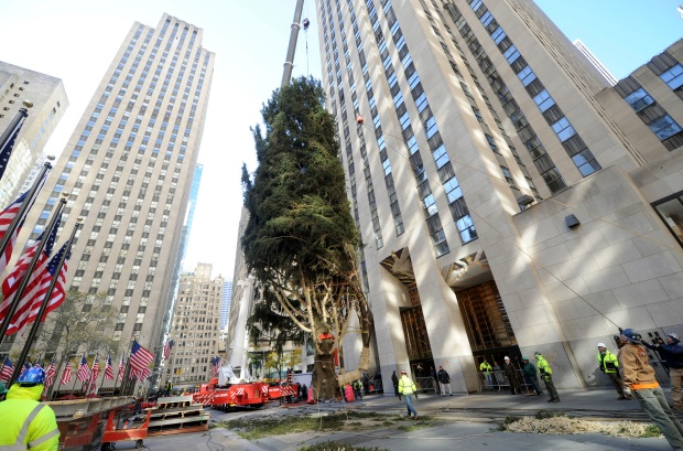 Ta-Da! See How a 75-Foot Tree Gets a Major Lift