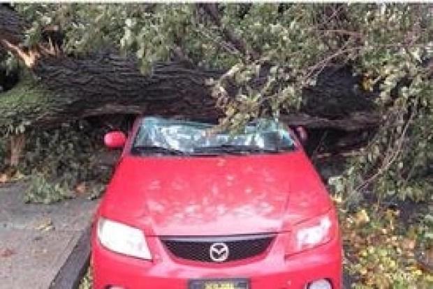 [NY] Who Pays When a Tree Falls?
