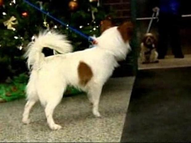 [NY] Abused Dog Leaves Shelter