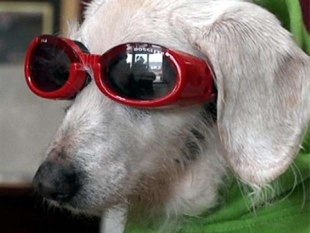[NY] Oldest Dog Alive Turns 21