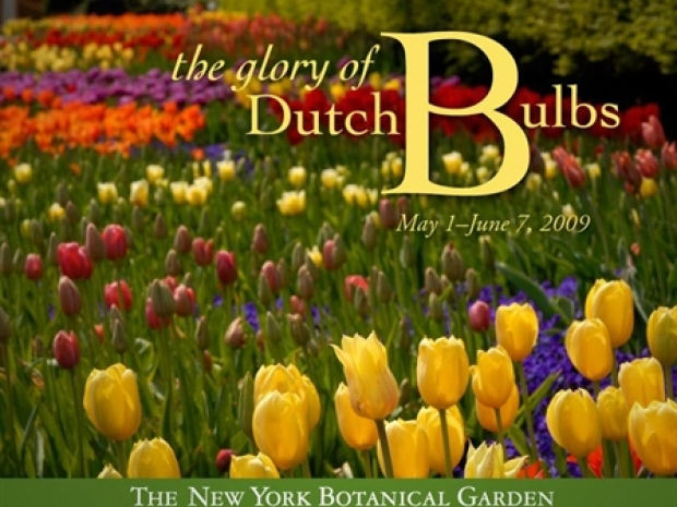 [NY] The Glory of Dutch Bulbs