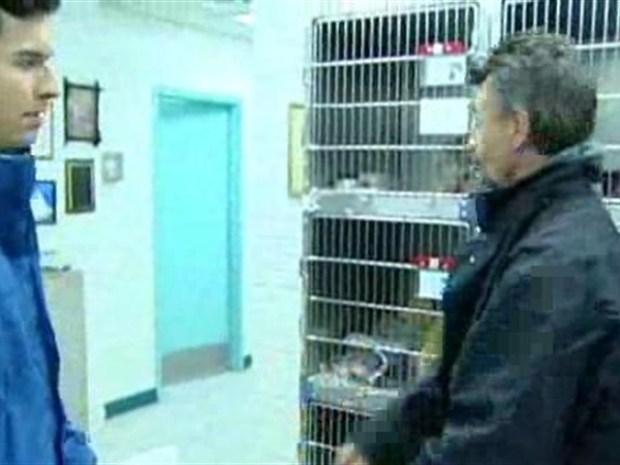 [NY] Newark Animal Shelter Collects Violations
