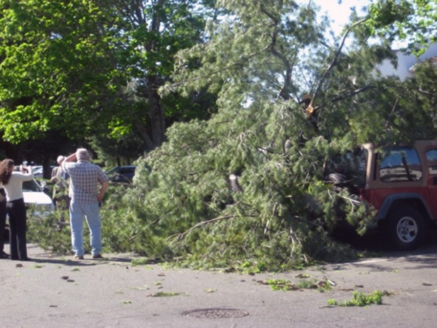 Heavy Winds Bring Down Trees, Wires