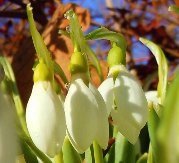Your Photos: Signs of Spring