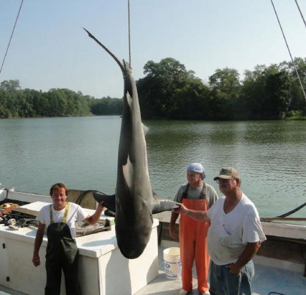"""""""Jaws"""" in the Potomac"""