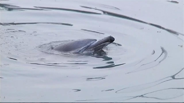 [NY] Dolphin Dies After Getting Stranded in Gowanus Canal