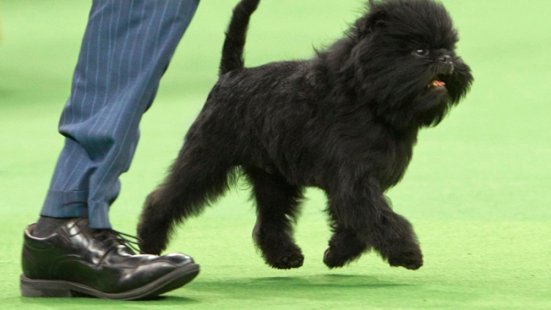 Dog Lover's Heaven: Westminster Pooches