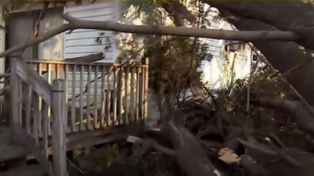 Giant Tree Falls onto Home in West Orange