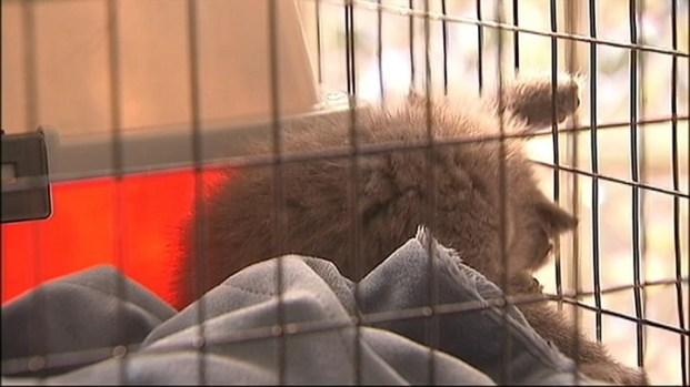 [NY] Kitten Survives Toss from Car