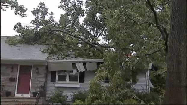[NY] Storm Topples Trees, Power Lines in NJ