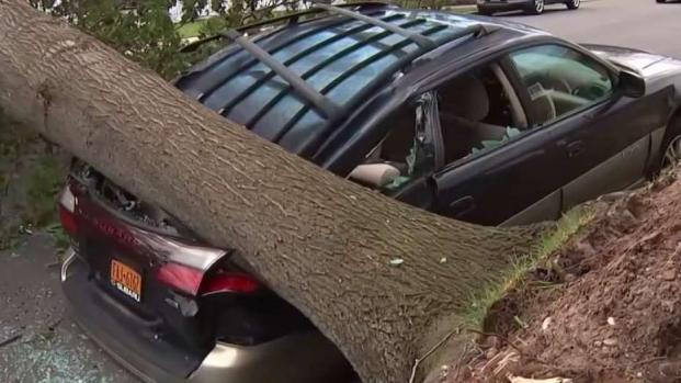 Wind Damage Cleanup on Long Island After Storm