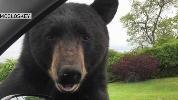 [NECN] Woman Shares Story After Bear Encounter in RI