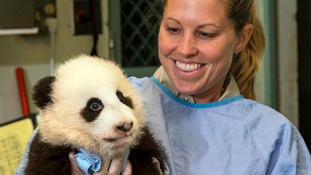 [NY] Cute Baby Panda Named