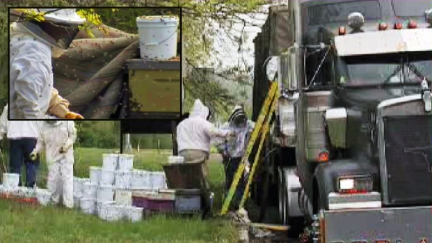 [NY] Thousands of Bees Escape Disabled Truck in NJ