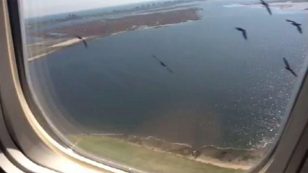 [NY] Bird Strike Prompts Emergency JFK Landing
