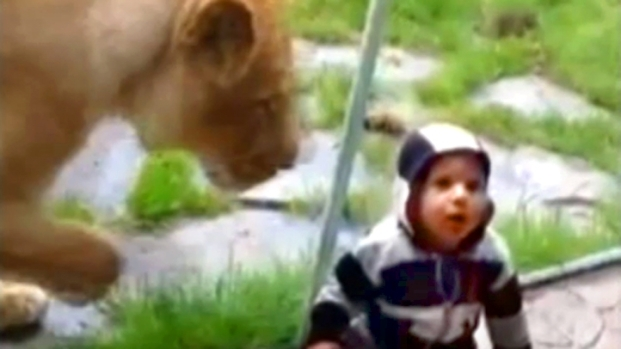 [NEWSC] Lion Swipes at 1-Year-Old Boy