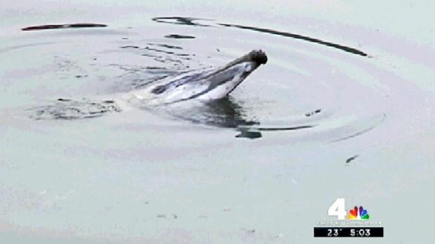 [NY] Dolphin Stuck in Gowanus Canal