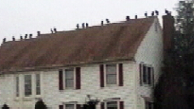 [NY] Vultures Invade NJ Neighborhood