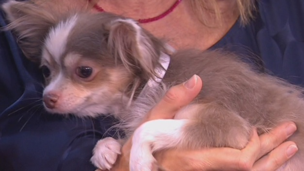 Pet Profile: Microchipping