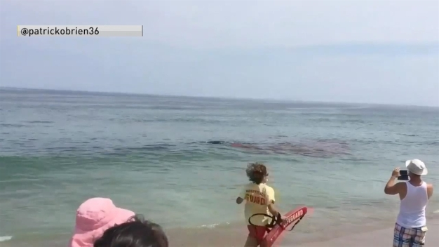 Beach-Goers React to Seeing Shark Kill Seal