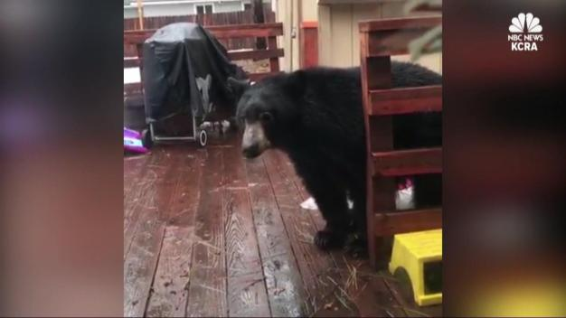Viral Bear-on-Porch Video Triggers Warning