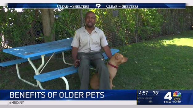 Benefits of Older Pets