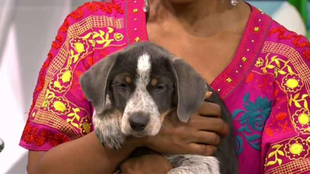 Clear the Shelters: Grape & Cherry}