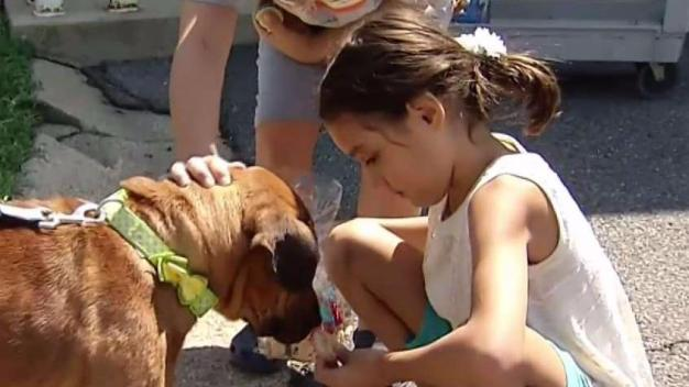 Clear the Shelters: Emotional Adoption Tales From Across US