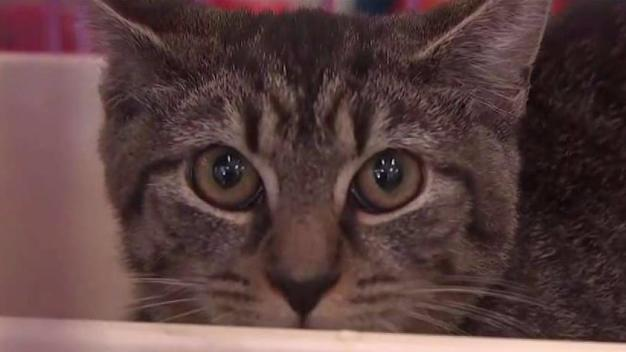 Clear the Shelters: Second Chance Animal Rescue