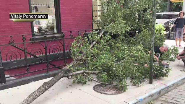 Falling Tree Traps Man on NYC Sidewalk