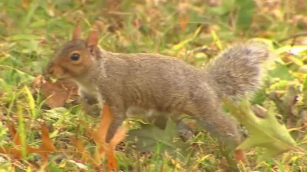 Group Counts How Many Squirrels Are in Central Park