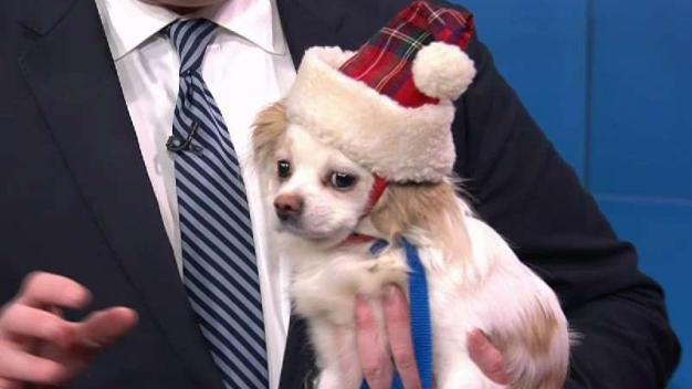 Keeping Pets Safe While Traveling for the Holidays