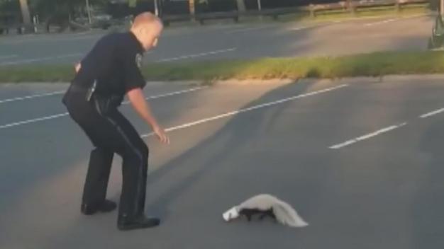 Skunk Sprays Officer During Rescue
