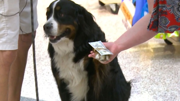 Golf Ball Retrieving Dog Uses Talent to Help Animals in Need