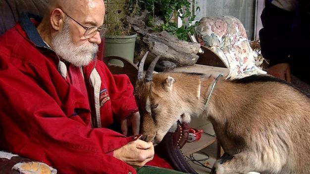 NY Man With Parkinson's Gets to Keep His Service Goat