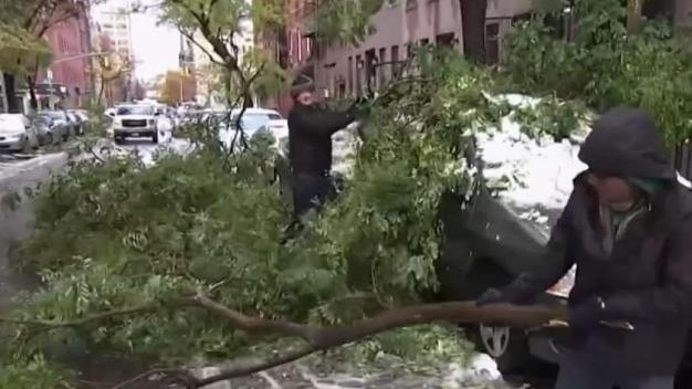 NYC Parks Department Warns About Falling Trees