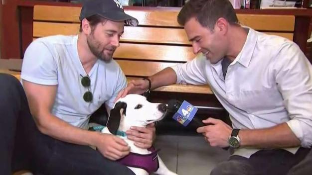 New Amsterdam's Ryan Eggold Helps Clear the Shelters