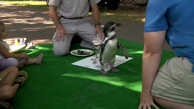 Penguin Uses Webbed Feet to Make Art