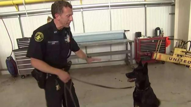 Port Authority Trains Dogs to Sniff Threats at Airports