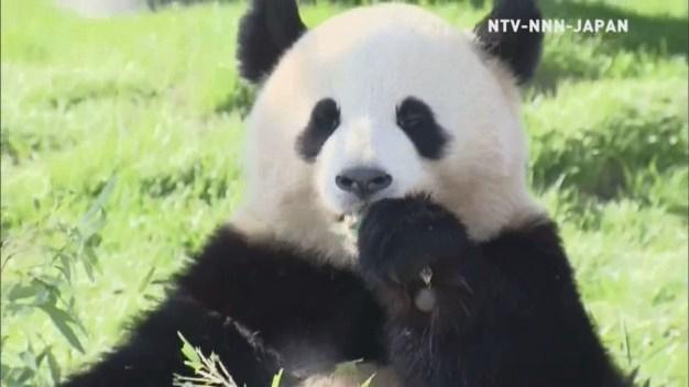 Twin Pandas Turn 2