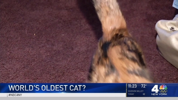 U.S. Cat, 29, May Be World's Oldest