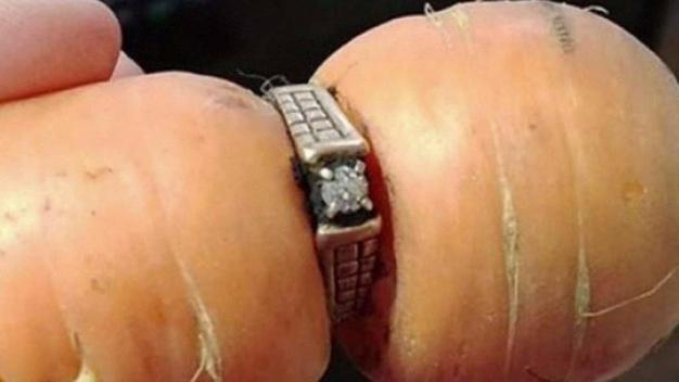 After 13 Years, Woman Finds Lost Wedding Ring on a Carrot