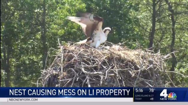 Woman Seeks Bird Whisperer to Help Evict Ospreys