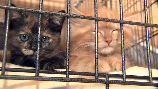 Clear the Shelters Drive Gets 9K+ Tri-State Pets New Homes