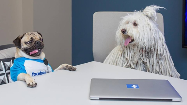 Internet's Favorite Dogs Meet for Facebook Power Lunch