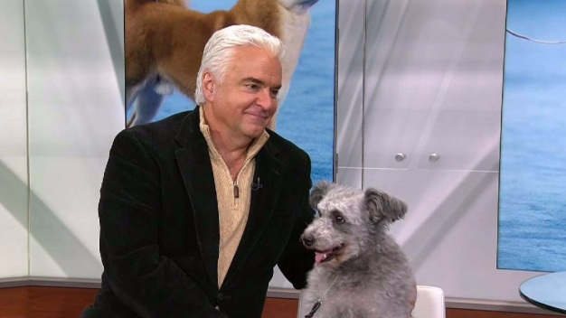 John O'Hurley Talks 'The National Dog Show'