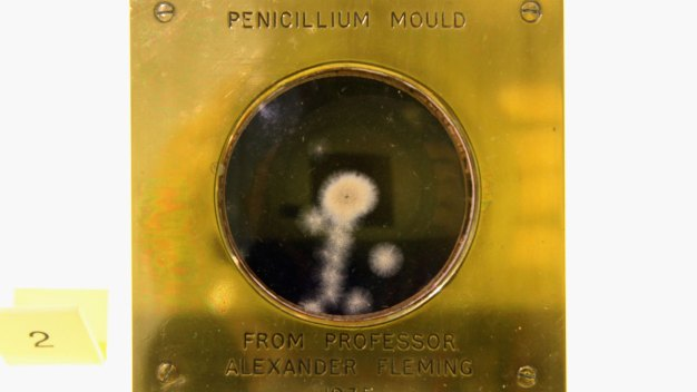 Millions May Be Misdiagnosed as Allergic to Penicillin