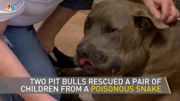 Family Dogs Save Grandkids From Venomous Snake