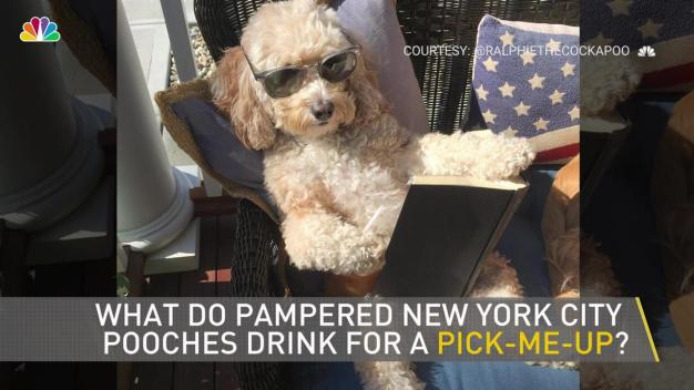 NYC Dogs Are Going Crazy For This Free Secret Menu Item