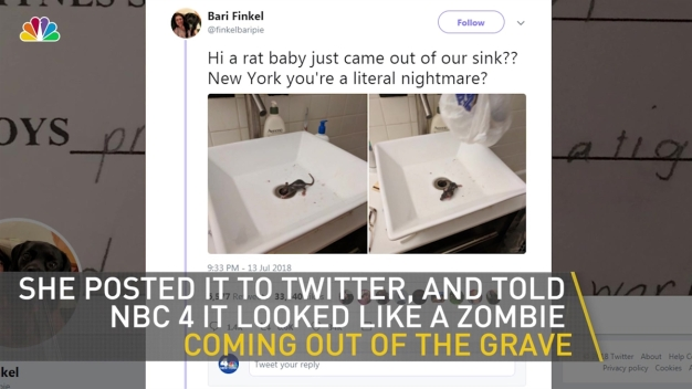 Rat Climbs Out of NYC Bathroom Sink